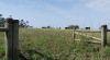 Novo campo de Chans (A Guarda, Pontevedra)
