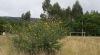 Campo de Bora (Pontevedra)